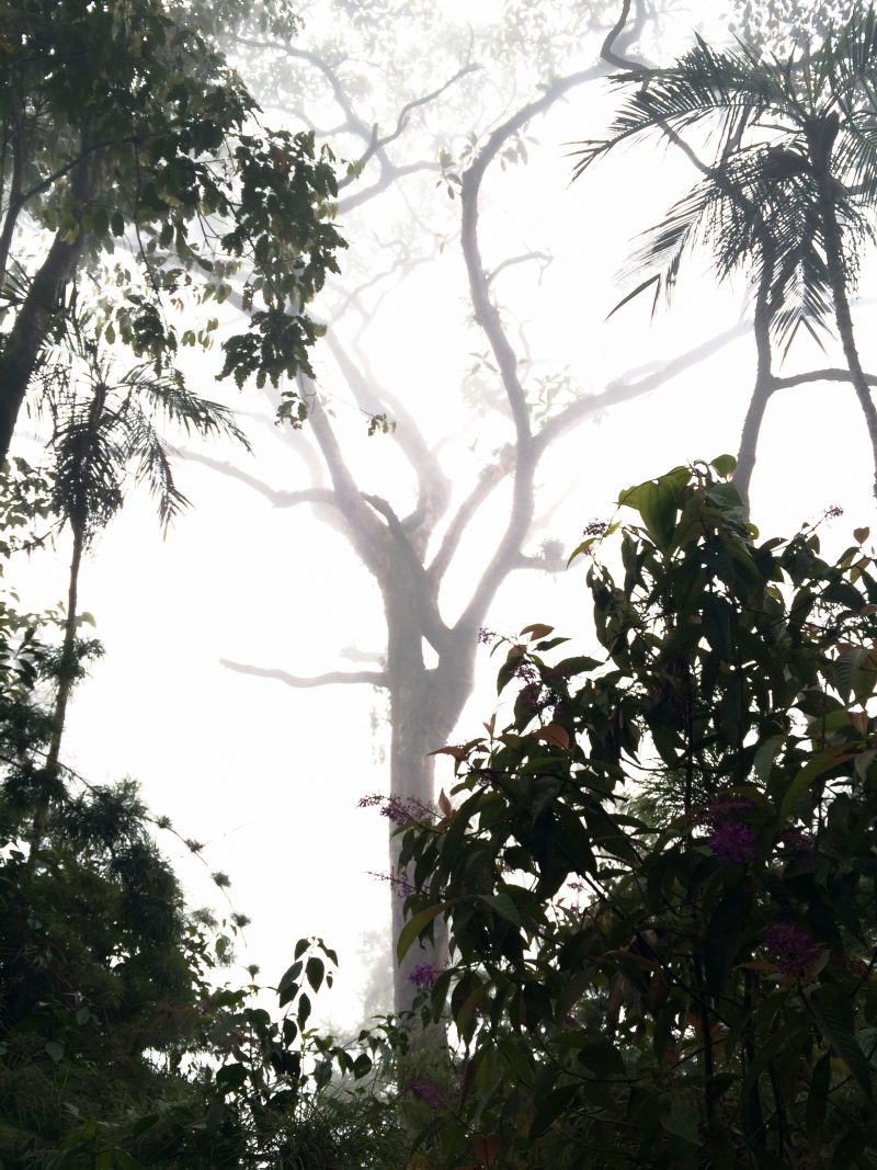 Mysterious Chicaque